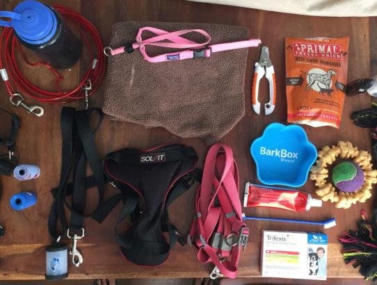 Inside Ripley's Backpack