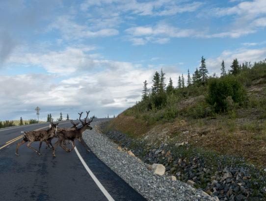 Alaska Trip 2015: Day Ten