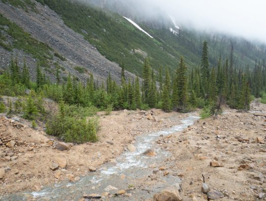 Banff and Jasper Trip: Day Twelve